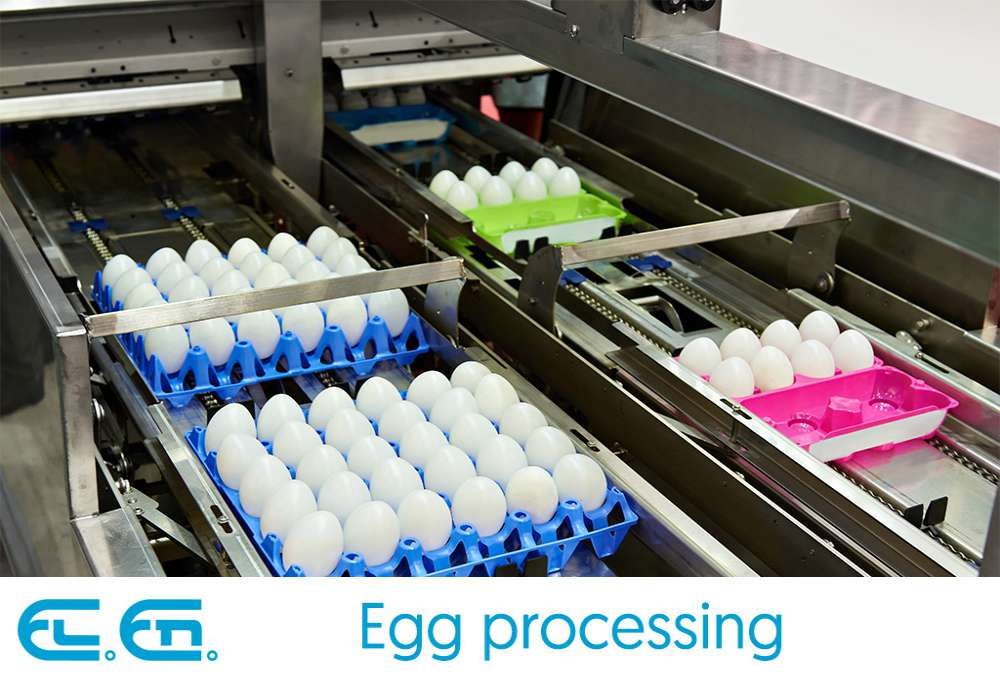Egg processing